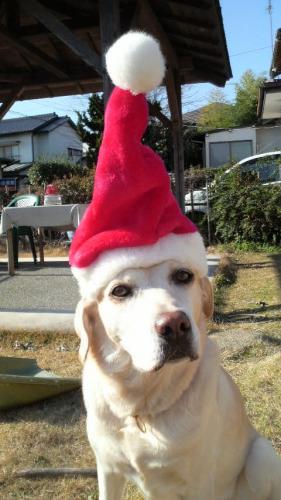 サンタももちゃん