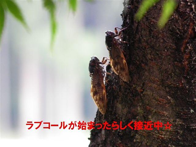夏の終わりに (2)