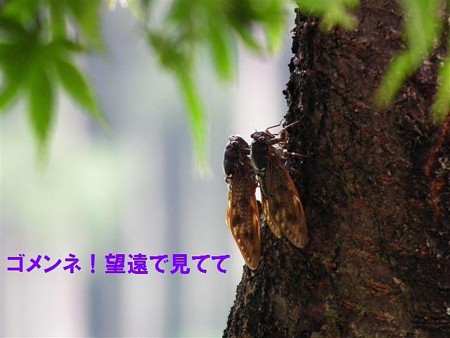 夏の終わりに (3)