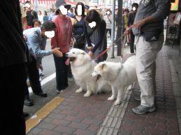 川越祭り 10月17日 7