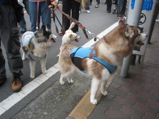 川越祭り 10月17日 10