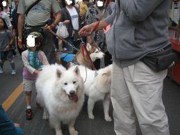 川越祭り 10月17日 18