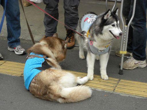 川越祭り 10月17日 19