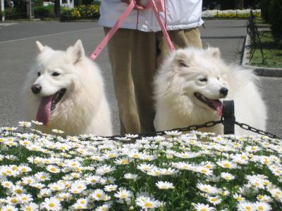 2011 4月21日 横浜 6