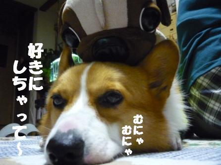 がうとちぇりーちゃん