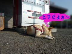 PICT0942.jpg