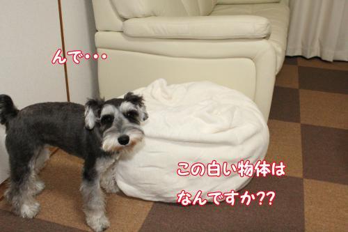 006@_convert_20120101010239.jpg