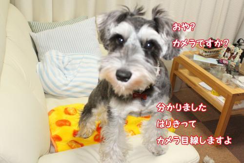 014@_convert_20120101005829.jpg