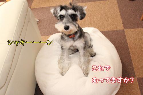 022@_convert_20120101011112.jpg