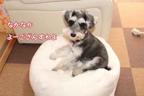 028@_convert_20120101011241.jpg