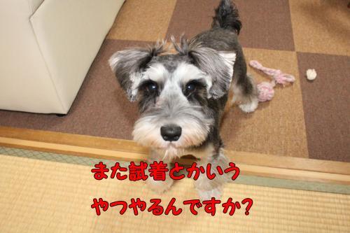 2011-12-23+009@_convert_20111225230922.jpg