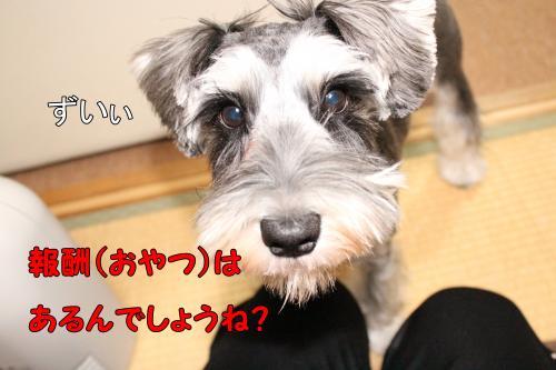 2011-12-23+010@_convert_20111225231007.jpg