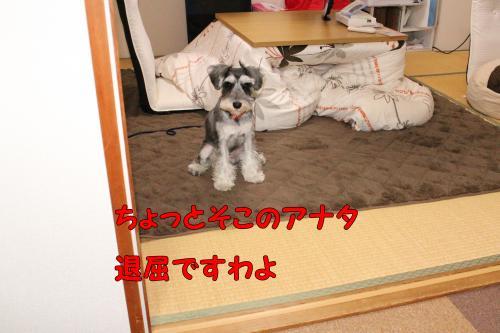 2011-12-23+014@_convert_20111224001139.jpg