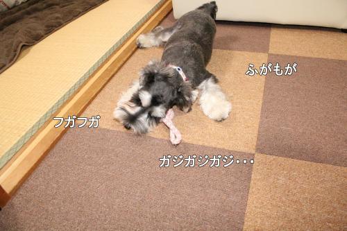 2011-12-23+019@_convert_20111224001824.jpg