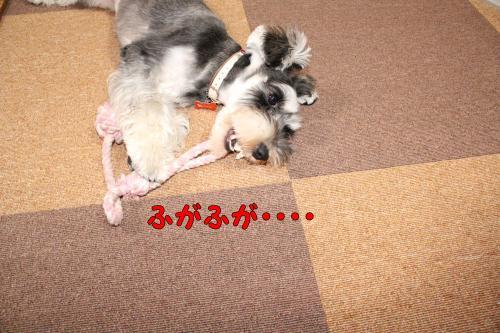 2011-12-23+020@_convert_20111224001909.jpg