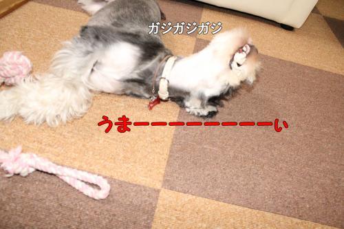 2011-12-23+028@_convert_20111224001948.jpg