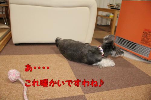 2011-12-23+043@_convert_20111224002203.jpg