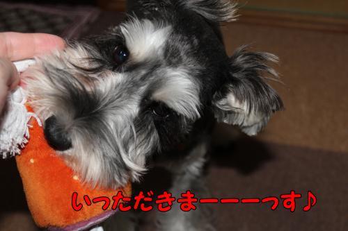 2011-12-23+053@_convert_20111228234411.jpg