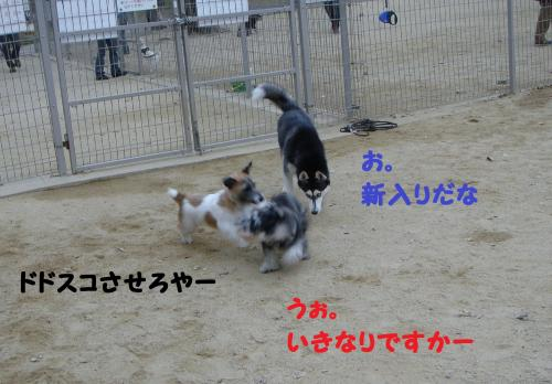 DSC05051+-+繧ウ繝斐・_convert_20111211101103