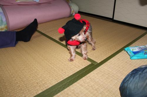 繧キ繝・繧キ繝・2011-12-17+031_convert_20111218001327