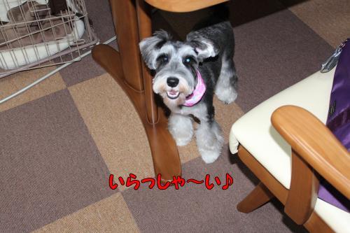 繧キ繝・繧キ繝・2011-12-17+035@_convert_20111219222933