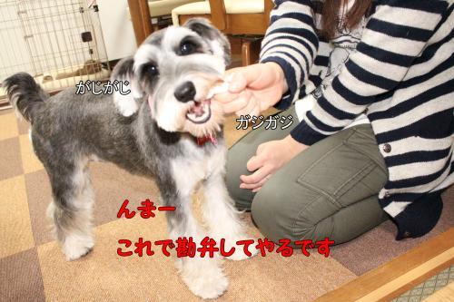 繧キ繝・繧キ繝・2011-12-17+055@_convert_20111219223055