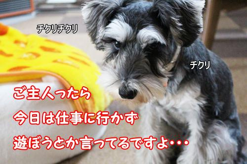 2012-01-09eos+016@_convert_20120119222949.jpg