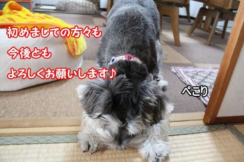2012-01-09eos+033@_convert_20120114012704.jpg