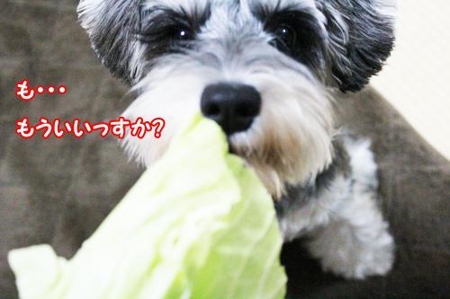 2012-01-09eos+063@_convert_20120115142552.jpg