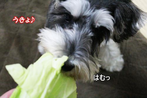 2012-01-09eos+067@_convert_20120115142659.jpg