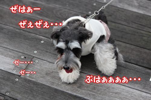 eos+032縺ョ繧ウ繝斐・_convert_20120122003027