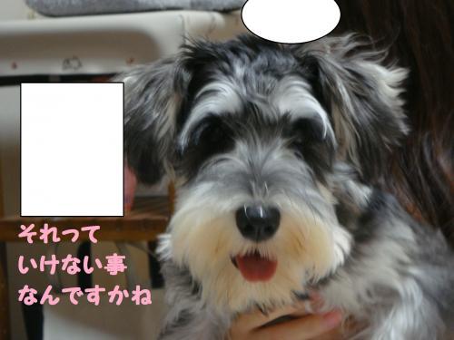DSC04823@_convert_20111207221336.jpg