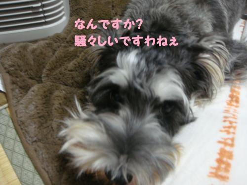DSC04827@_convert_20111207221257.jpg