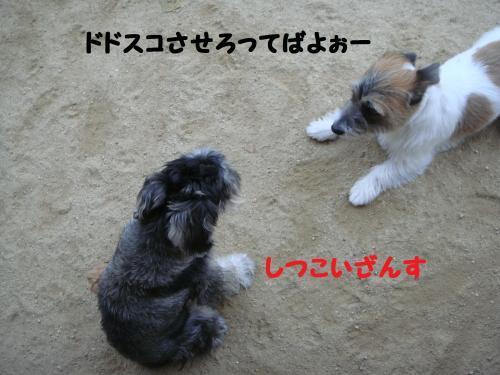 DSC05054@_convert_20111211101218.jpg