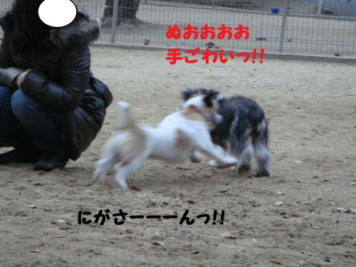 DSC05106@_convert_20111211101304.jpg