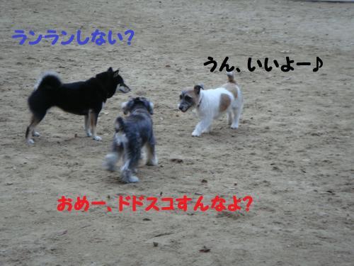 DSC05111@_convert_20111211103011.jpg