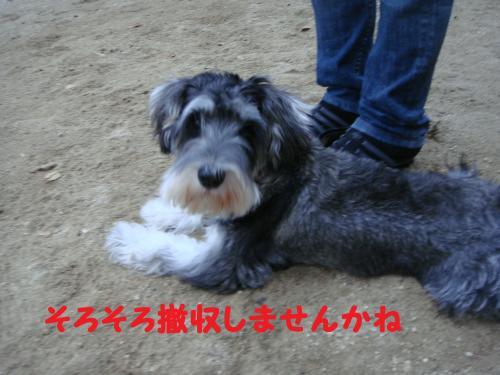 DSC05114@_convert_20111211104503.jpg