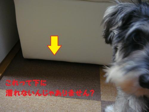 DSC05166@@_convert_20111214233123.jpg