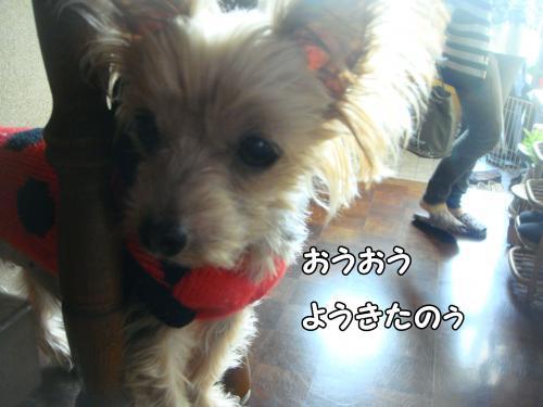 DSC05181@_convert_20111217235310.jpg