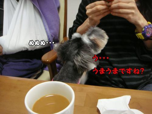 DSC05191@_convert_20111219221608.jpg
