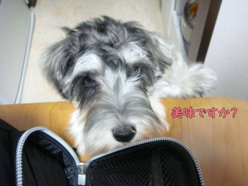 DSC05193@_convert_20111217230752.jpg
