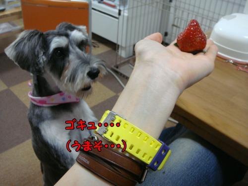 DSC05201@_convert_20111219221704.jpg