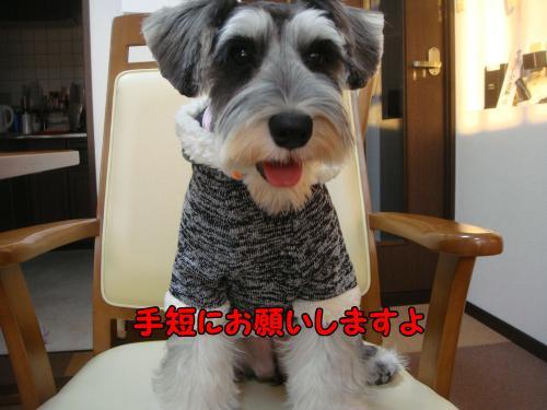 DSC05205@_convert_20111219221957.jpg