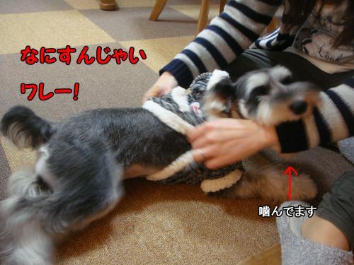 DSC05216@_convert_20111219221847.jpg