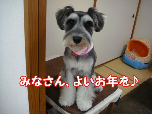 DSC05227@_convert_20111230110107.jpg