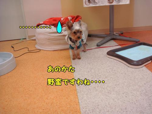 DSC05241@_convert_20111220221357.jpg