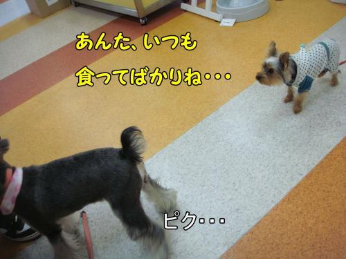 DSC05280@_convert_20111220224656.jpg