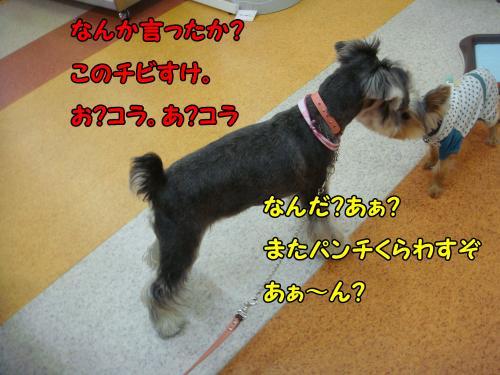 DSC05283@_convert_20111220224749.jpg