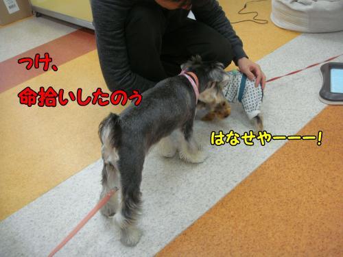 DSC05289@_convert_20111220224921.jpg