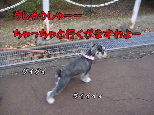 DSC05297@_convert_20111222220326.jpg